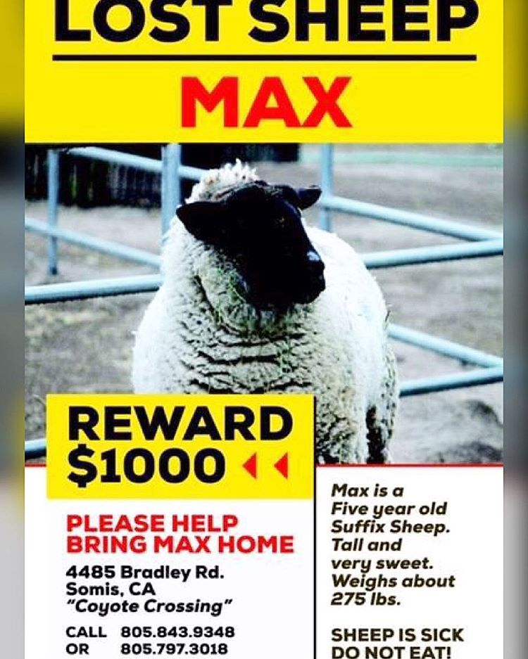 npf max the sheep